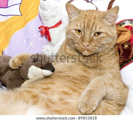 Fat orange cat with his toy otter. - stock photo