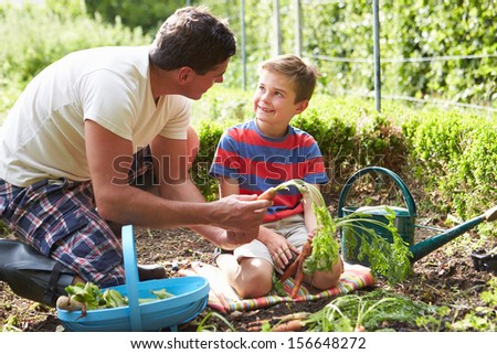 Father And Son Harvesting Carrots On Allotment - stock photo
