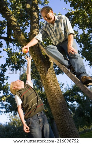 Father and son picking apples, man on ladder, low angle view