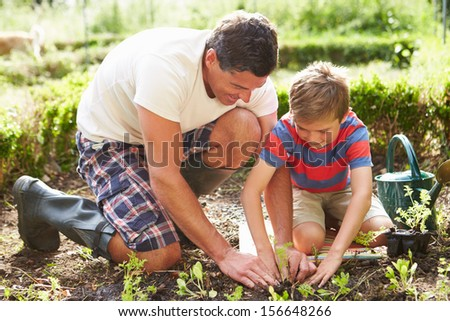 Father And Son Planting Seedling In Ground On Allotment - stock photo