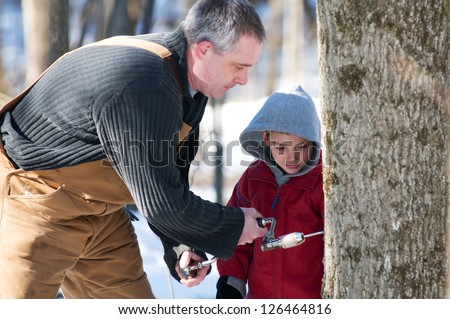 father and son use a hand drill to tap a maple tree - stock photo