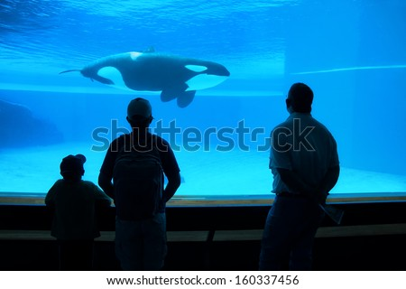 father and two sons watching orca whale in aquarium, silhouettes against blue water - stock photo