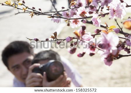 Father helping his son take photographs of the cherry blossoms - stock photo