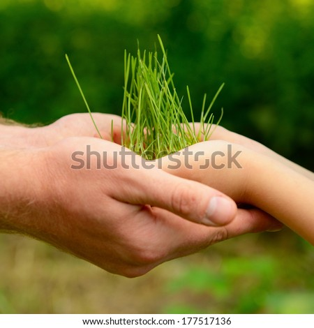 Father's and son's hands holding green growing plant over nature background. New life, spring and ecology concept - stock photo