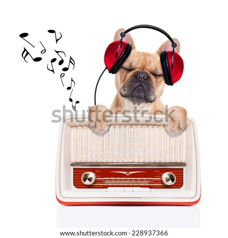 fawn bulldog dog listening music, while relaxing and enjoying the sound of an old retro radio, isolated on white background - stock photo