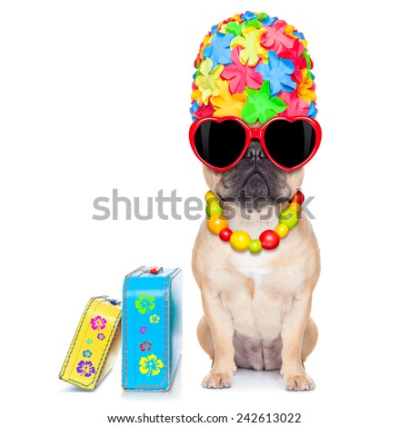fawn french bulldog dog ready for summer vacation or holidays, besides luggage, isolated on white background - stock photo