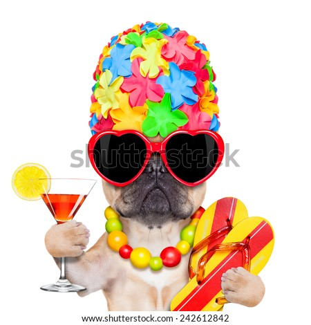 fawn french bulldog dog ready for summer vacation or holidays, wearing sunglasses and having a  cocktail,  isolated on white background - stock photo