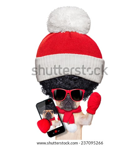 fawn french bulldog dog wearing winter clothing taking a selfie , very proud of its big curly afro wig hair , isolated on white background, a really silly and crazy dumb look - stock photo