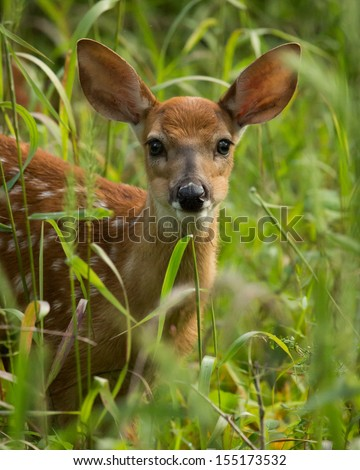 Fawn in tall grass - stock photo