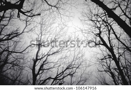 fear and anxiety among the fog - stock photo