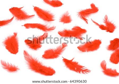 Feather - stock photo