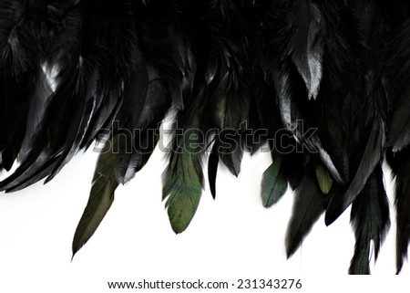 Feather Background - stock photo