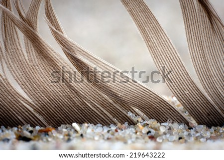 Feather covered by sand - stock photo