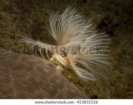 Feather Duster Worm - stock photo