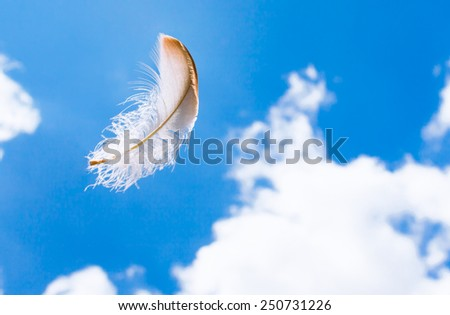 Feather flying in the air - stock photo