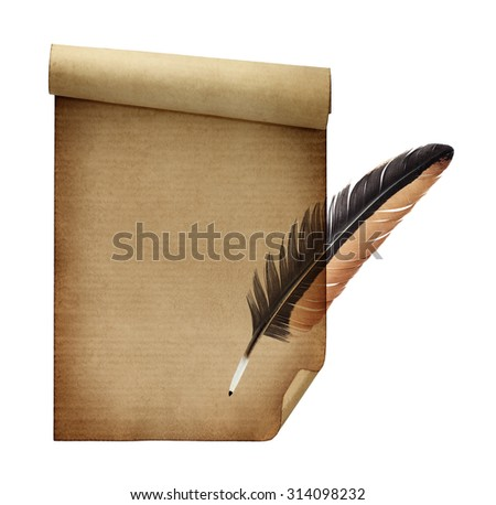 Feather isolated on paper background - stock photo