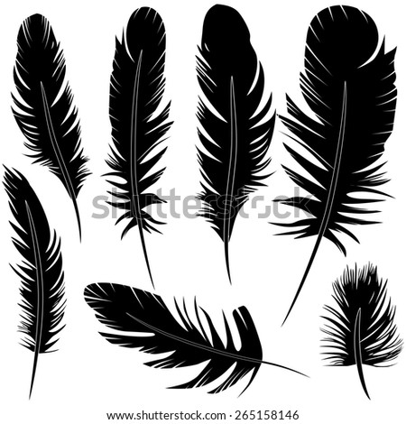 Feather of bird set illustration sketch. Raster version. - stock photo