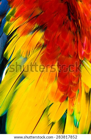 feather of some bird - macaw parrot colorful - stock photo