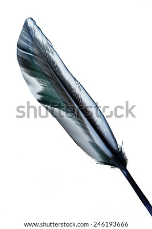 feather on a white background
