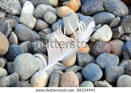 Feather on rocks - stock photo