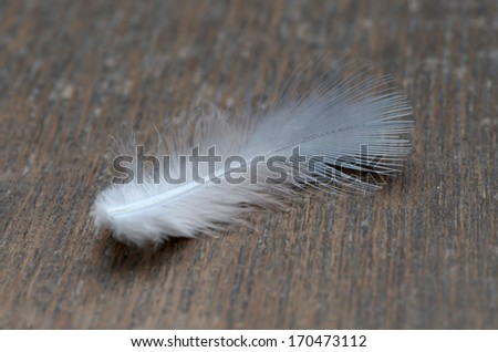 feather on the old wood texture. - stock photo