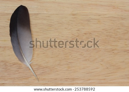 feather on wood background