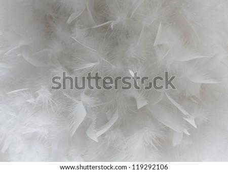 Feathers background, Bird white feathers close-up - stock photo