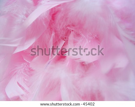 feathers from a boa - stock photo