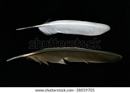 Feathers isolated on black background - stock photo