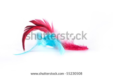 Feathers, isolated on white background
