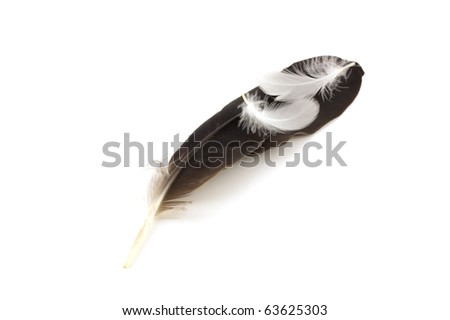 stock-photo-feathers-of-pigeon-over-whit