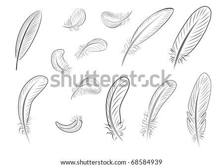 Feathers, painted with thin black lines - stock photo