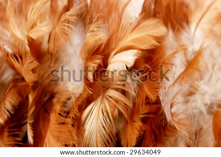 feathers-texture - stock photo