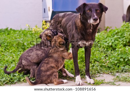 feeding a dog puppy - stock photo