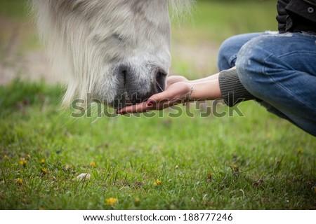 Girl giving a horse head