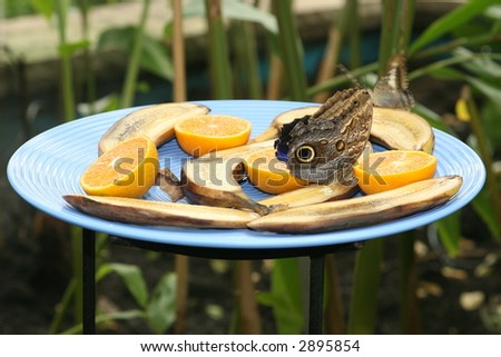 Feeding butterfly - stock photo