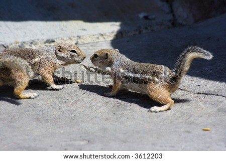 Feeding cute little domesticated chipmunks - stock photo