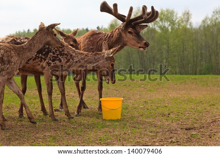 feeding deers in nature - stock photo