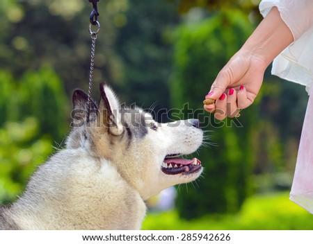 Feeding dog - Owners hand feeding dog - stock photo