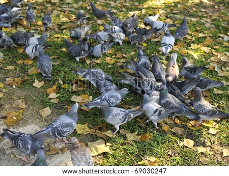 Feeding pigeons on the green lawn in the park