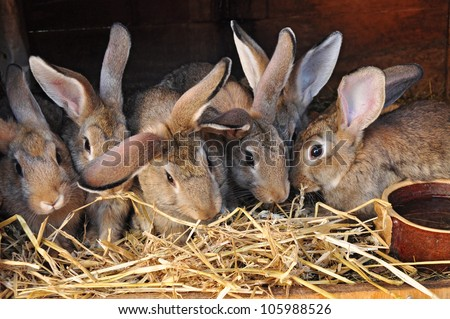 Feeding rabbits on animal farm in rabbit-hutch. - stock photo