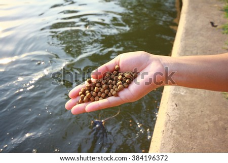 Feeding the fish,The food fish, focus on food.Fish meal in hand,Feeding fish in Fish pond - stock photo