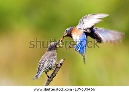 Feeding time  - stock photo