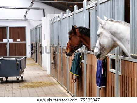 Feeding time for brown and white horse in a barn - stock photo