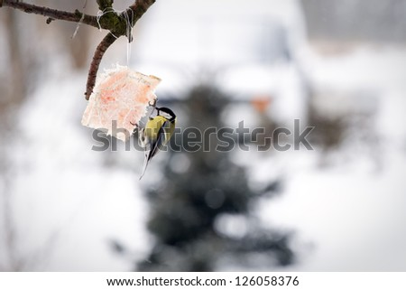 feeding tit birds in winter time - stock photo