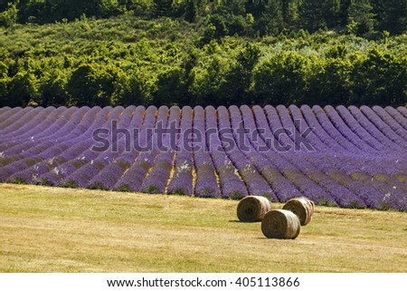 Feelds of blooming lavander and haystacks near Sault, Vaucluse, Provence, France - stock photo