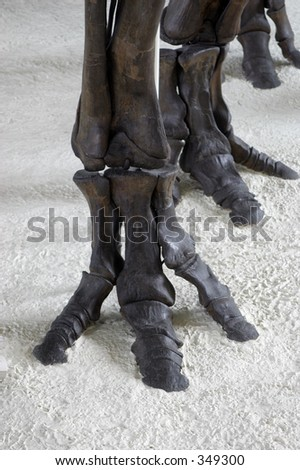 feet of a dinosaur - stock photo
