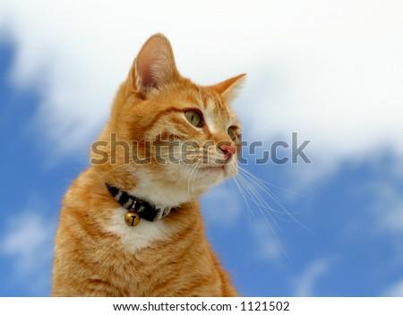 Feline Stalking - stock photo