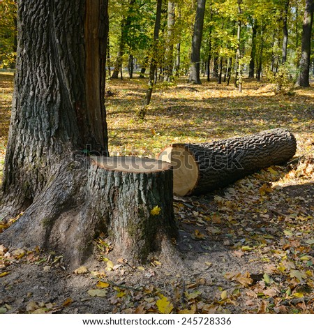 Felled tree in the forest - stock photo