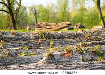Felled trees on the ground during deforestation. Environment, nature and deforestation forest - stock photo
